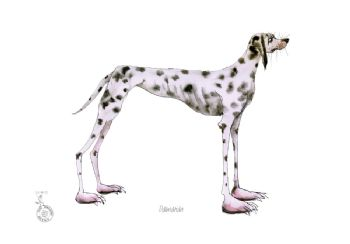 Fun Dog Art Print - Dalmation